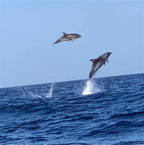 Blue M Yacht / Dolphin & Whale Watching (12 pax max