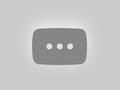 Learn How to Draw a Macaroni Penguin (Antarctic Animals
