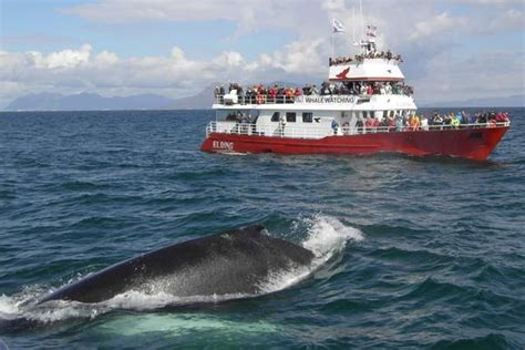 Whale Watching from Reykjavik - Big list of all the whale