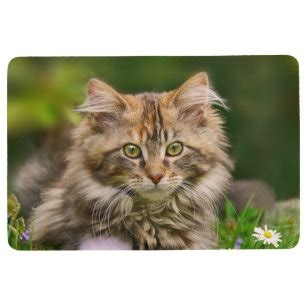 Animals Pets Cats Maine Coon Gifts on Zazzle AU