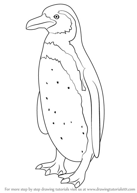 Learn How to Draw a Humboldt Penguin (Antarctic Animals
