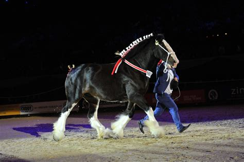 Horse of the Year Show entries are NOW OPEN | The Horse of
