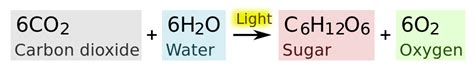 Difference Between Oxygenic and Anoxygenic Photosynthesis