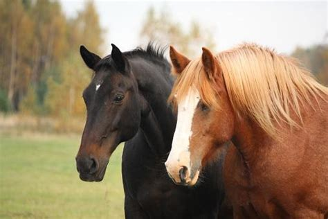 French Horse Names   LoveToKnow