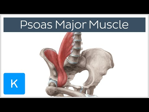 anatomy 2 muscles - Biology 3455 with Ramirez/willson at