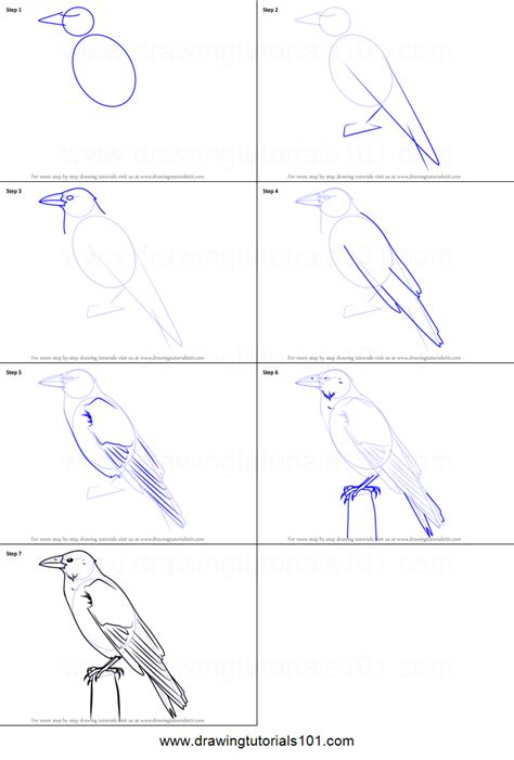 How to Draw a Carrion Crow printable step by step drawing