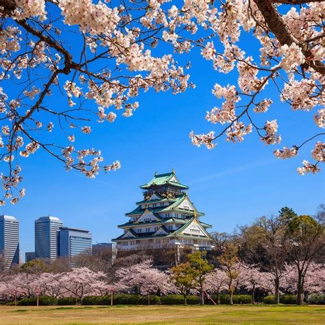 Chris Rowthorn's Inside Osaka Travel Guide – COOL HUNTING®