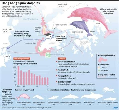 Hong Kong's dolphins at risk of disappearing