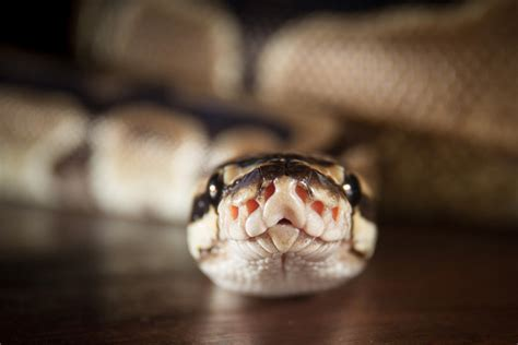 Video tutorial: How Python makes programming simple