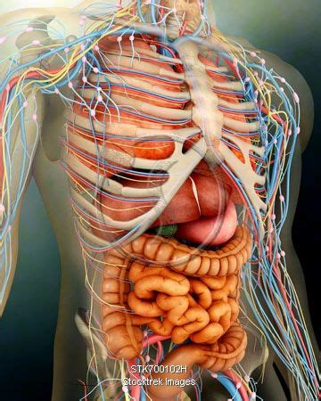 51 best images about Bones, Muscles and Anatomy on