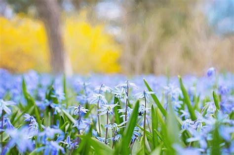 Spring Flowers Country Nature · Free photo on Pixabay
