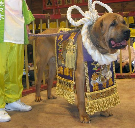 Tosa Inu   The Tosa or Japanese Mastiff is a breed of dog
